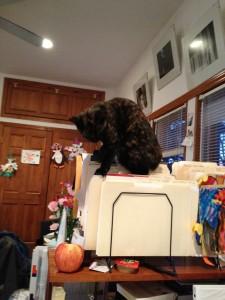 Sadie doing some filing.