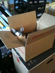 Zoie checking inventory.